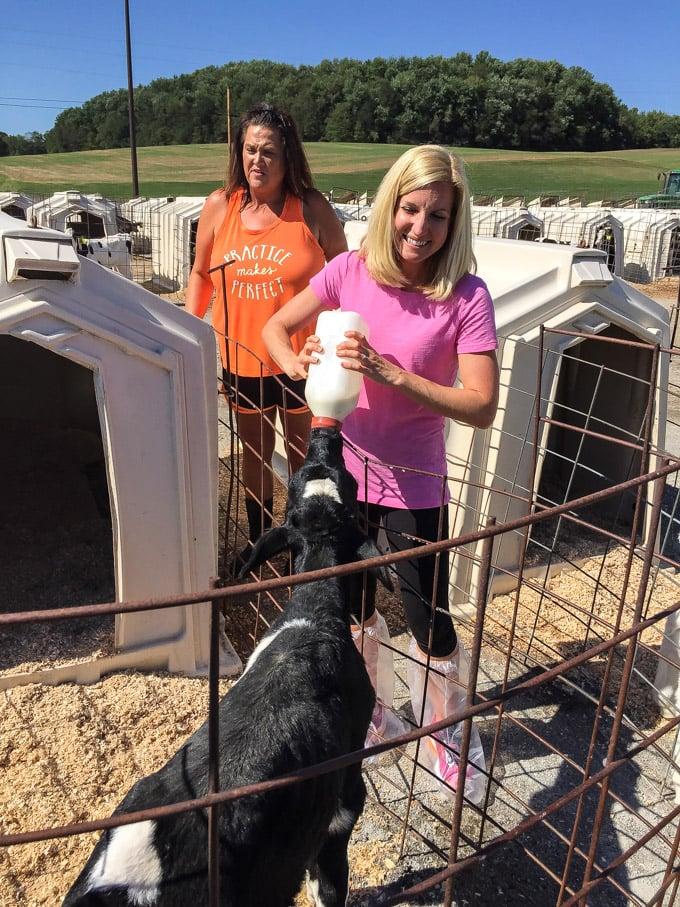 Ohio Dairy Trip | Andreas Dairy Farm